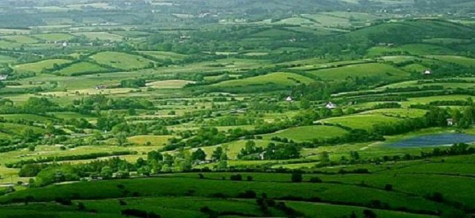 ireland-fields 5 319