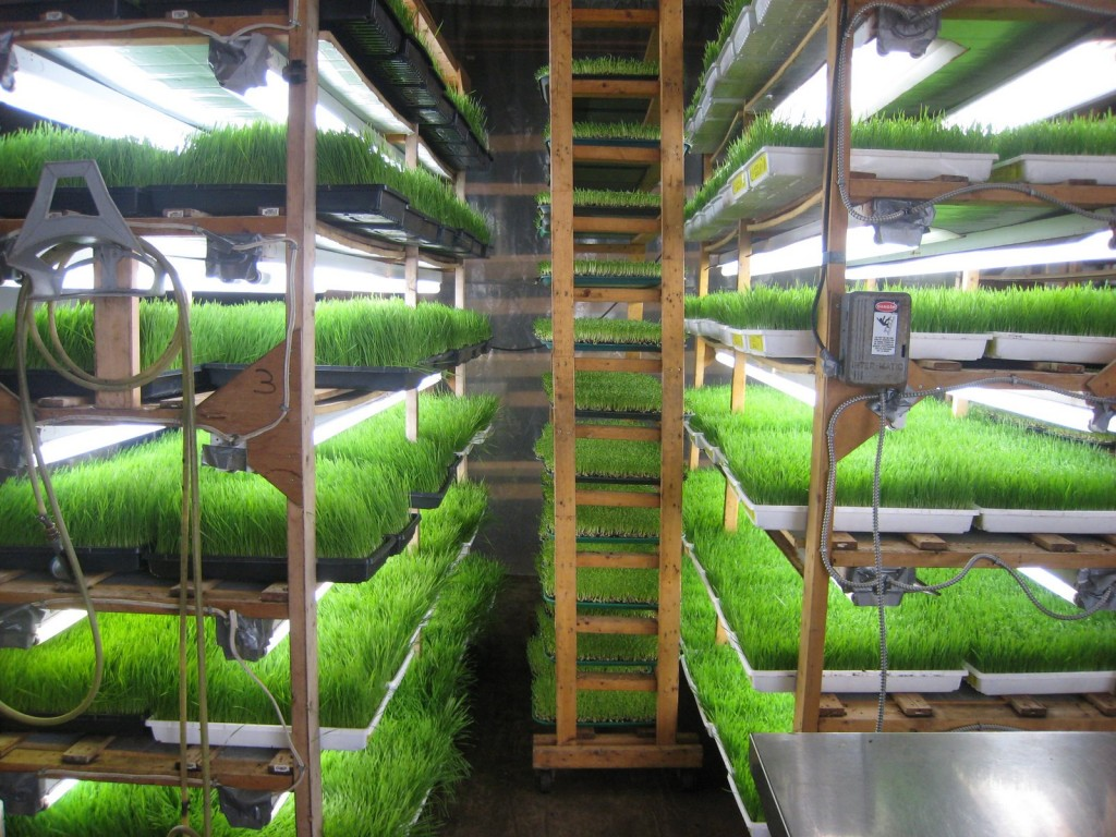 Sprouting at home - racks at Toronto sprouts