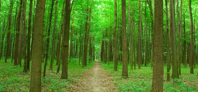 Green Path crop