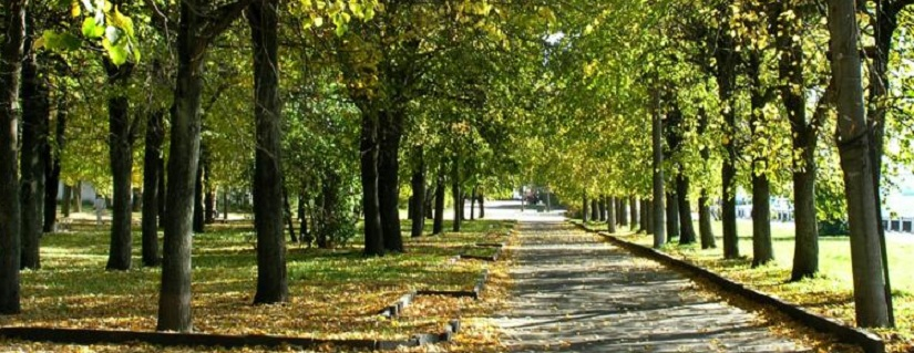 5 Day Green Cleanse Detox - walk