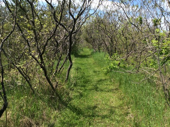 back to nature smoothie and trails to medicine wheel 10