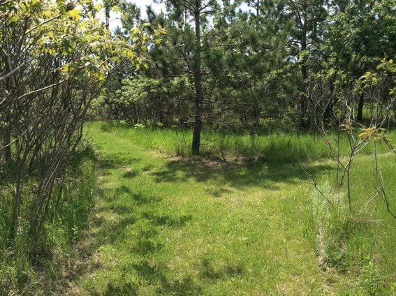 back to nature smoothie and trails to medicine wheel 11