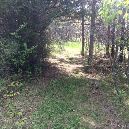 back to nature smoothie and trails to medicine wheel 13
