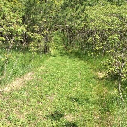 back to nature smoothie and trails to medicine wheel 17