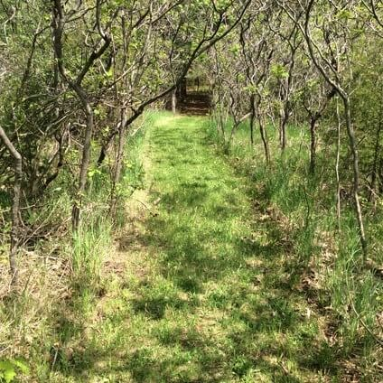 back to nature smoothie and trails to medicine wheel 18