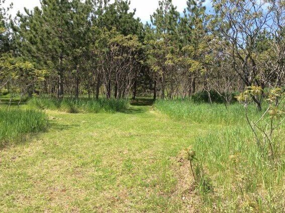back to nature smoothie and trails to medicine wheel 4
