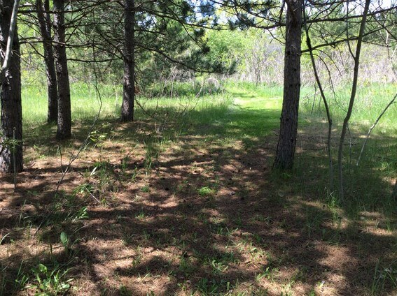 back to nature smoothie and trails to medicine wheel 6