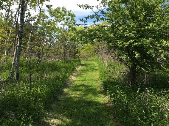back to nature smoothie and trails to medicine wheel 7