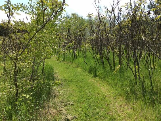 back to nature smoothie and trails to medicine wheel 8