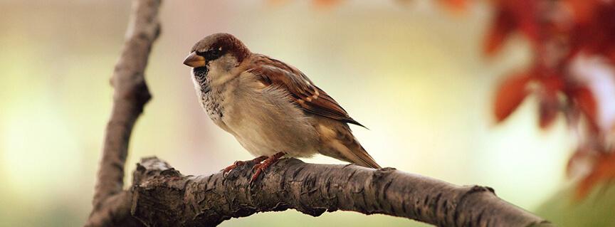 sparrow 864