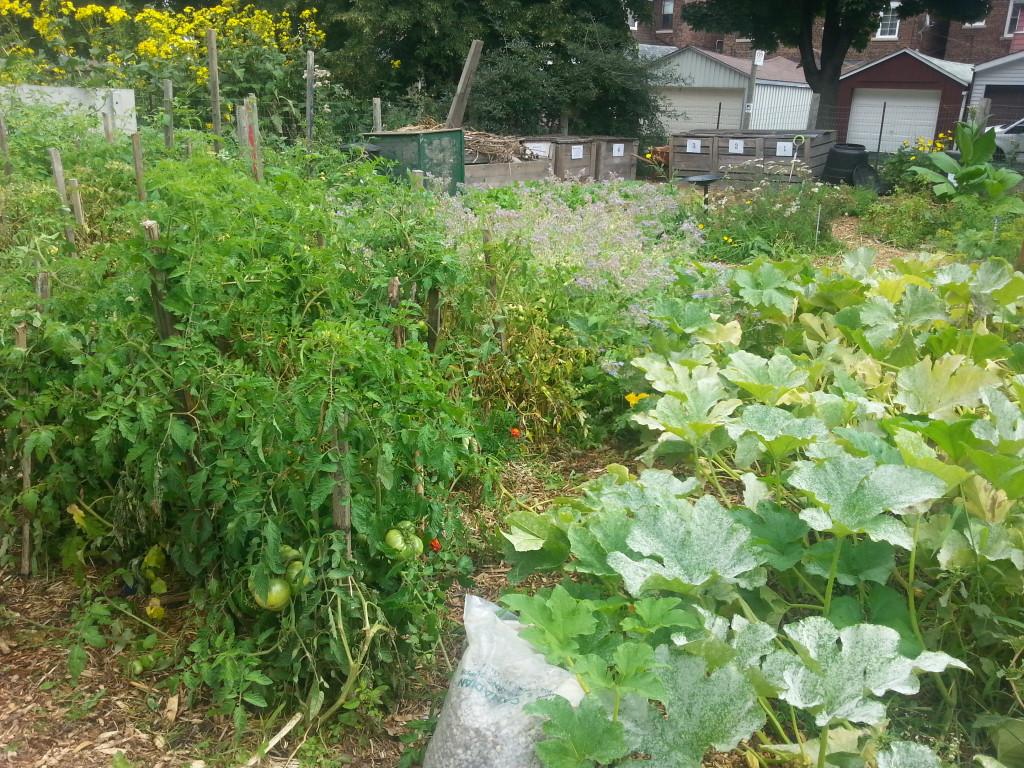 Earlescourt park and community garden project 10