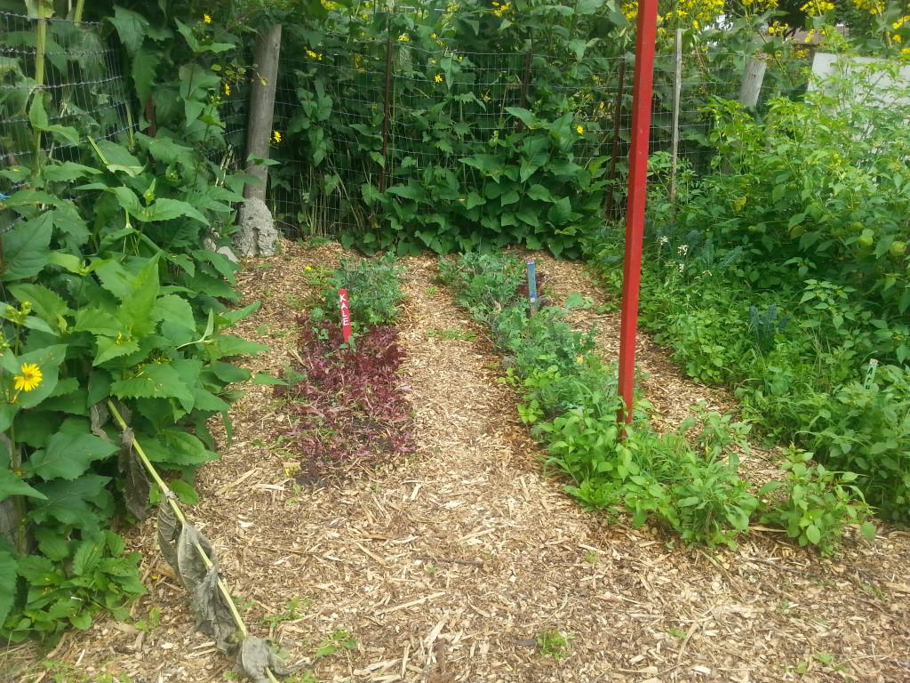Earlescourt park and community garden project 13