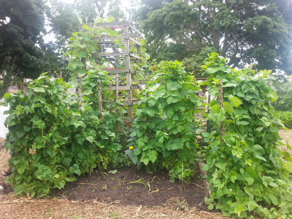 Earlescourt park and community garden project 14