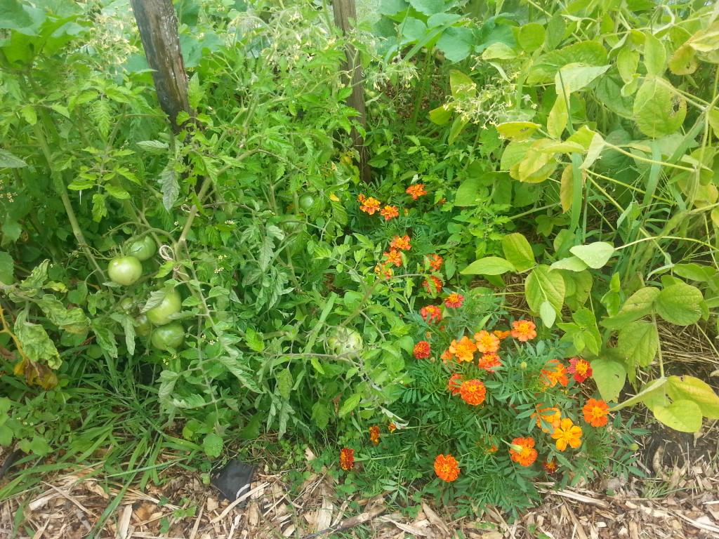 Earlescourt park and community garden project 15
