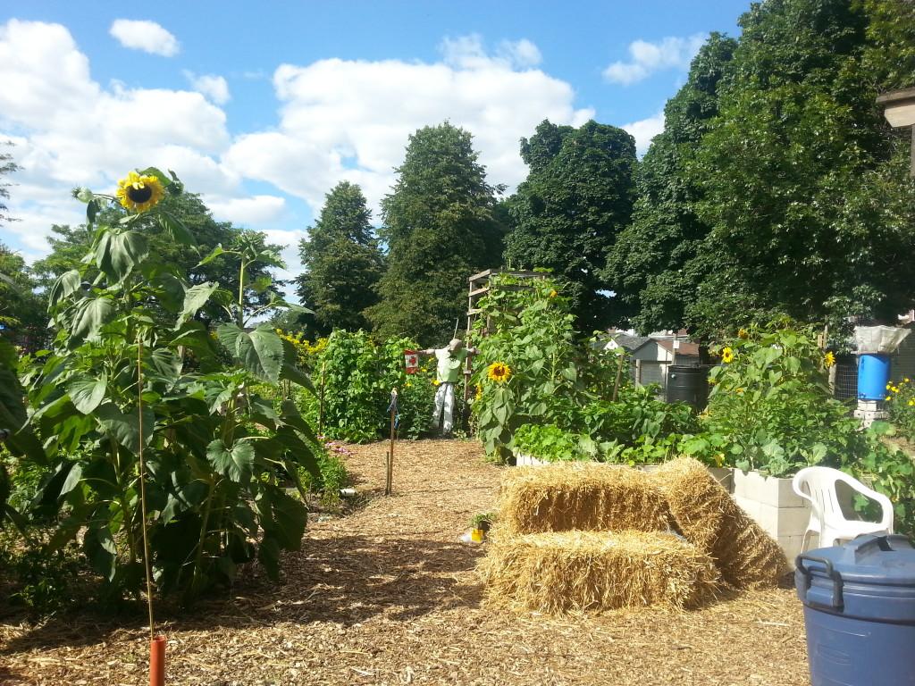 Earlescourt park and community garden project 6