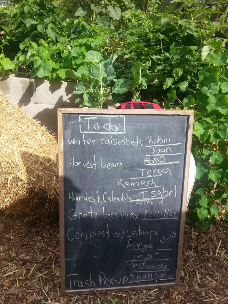 Earlescourt park and community garden project 7