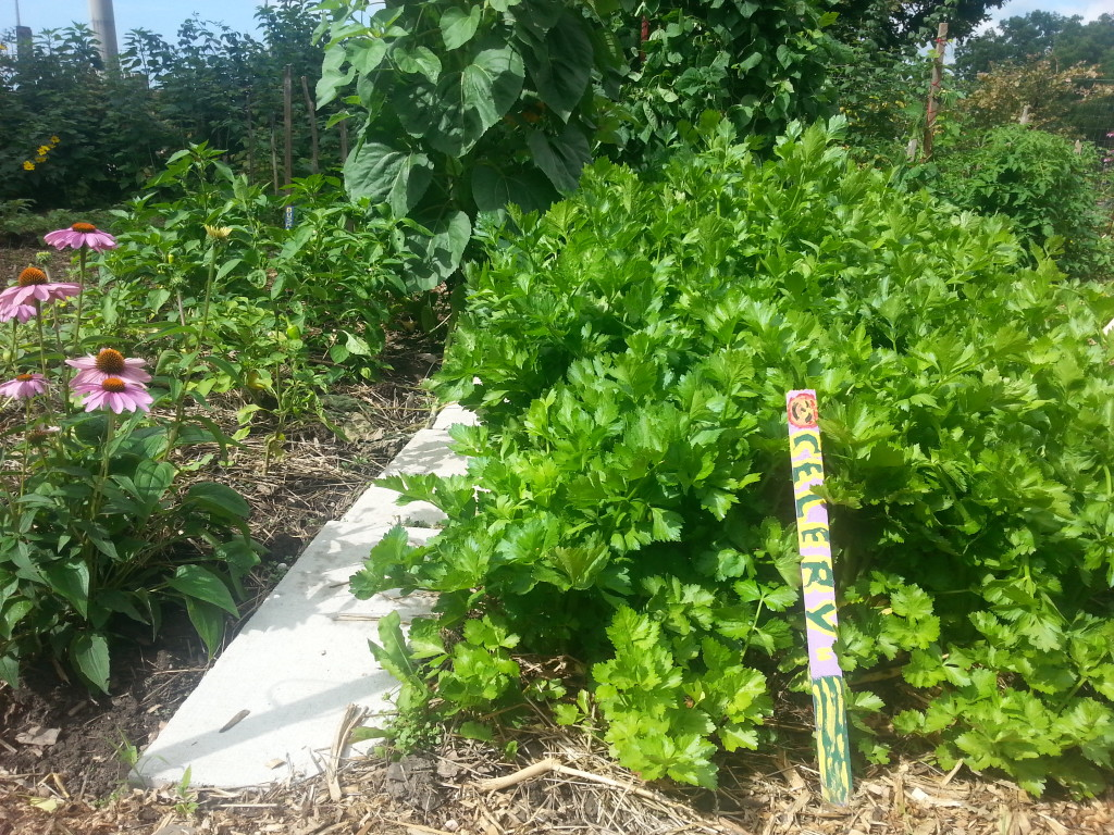 Earlescourt park and community garden project 8