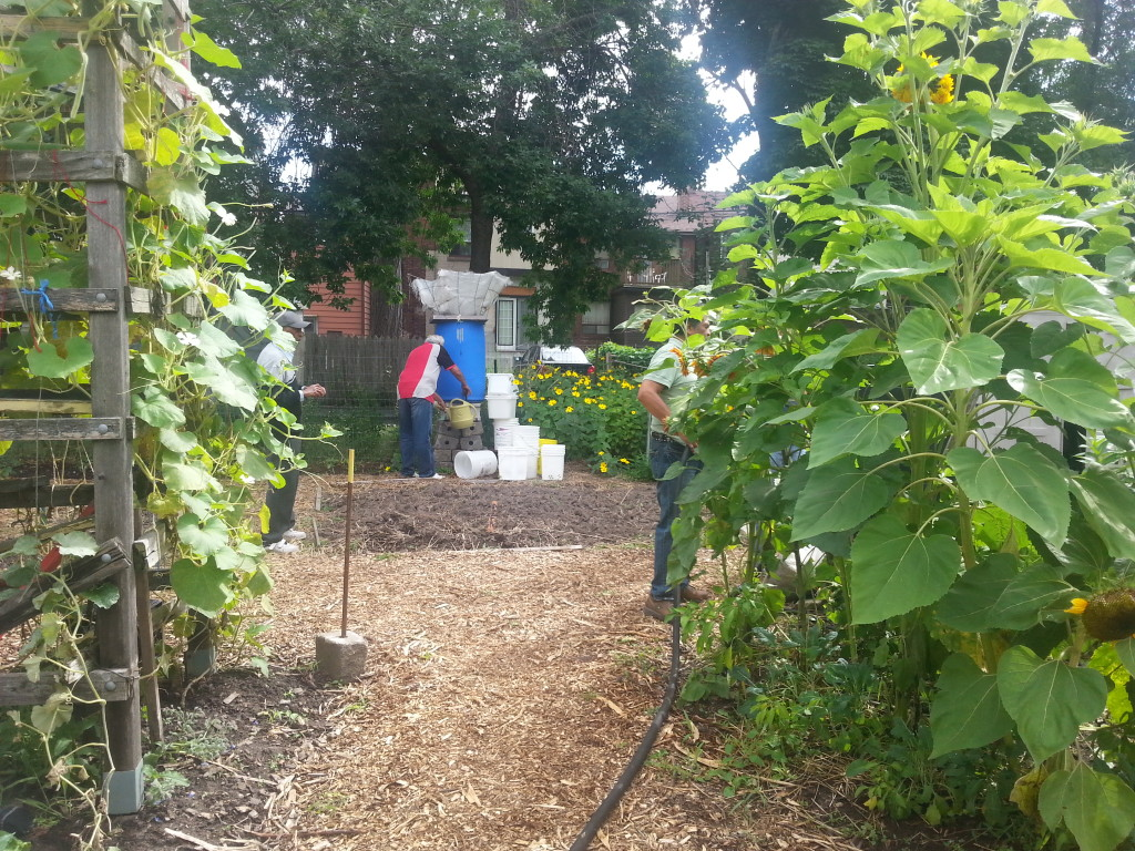 Earlescourt park and community garden project 9