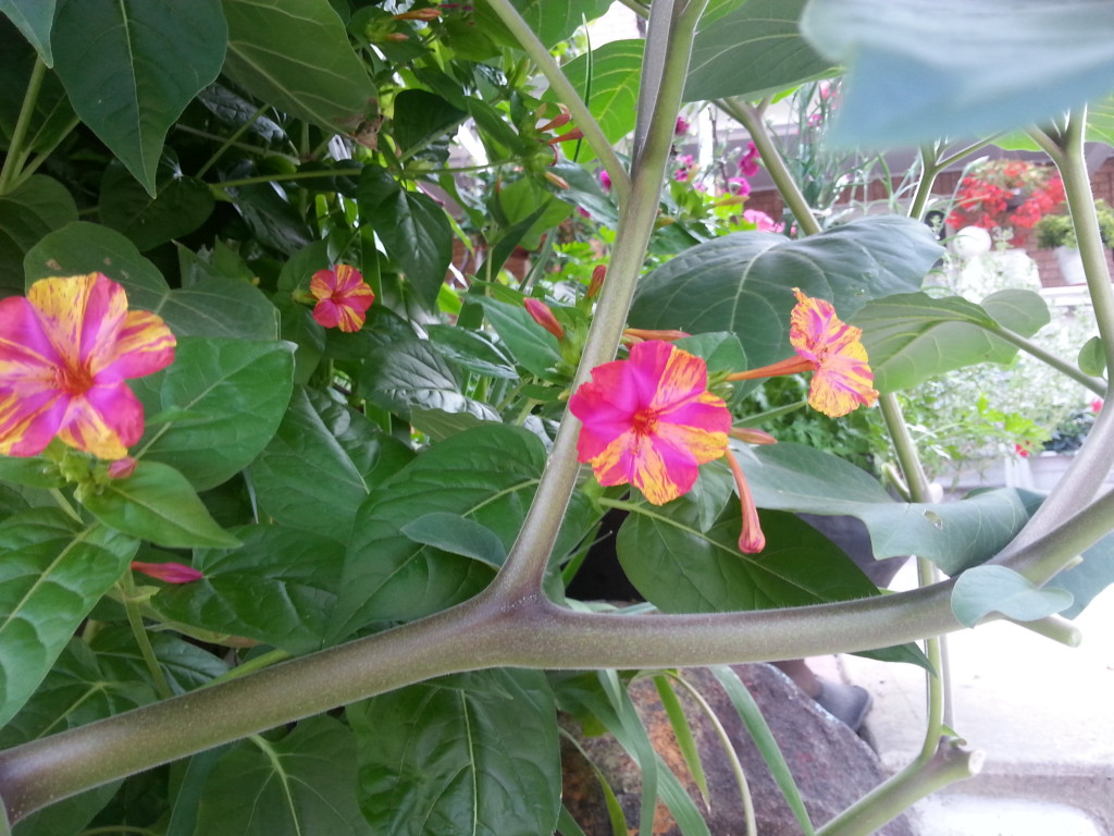 Garden Walk and Minestrone Verde Soup Recipe 4